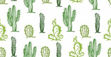 Imágenes de Cactus